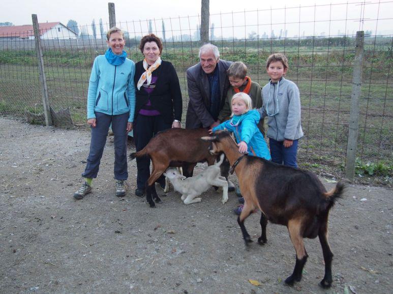Des chèvres alpines (de France) pour nourrir les agneaux !