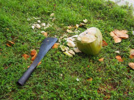 La maison est fournie avec les cocos et la technique ... Yes !