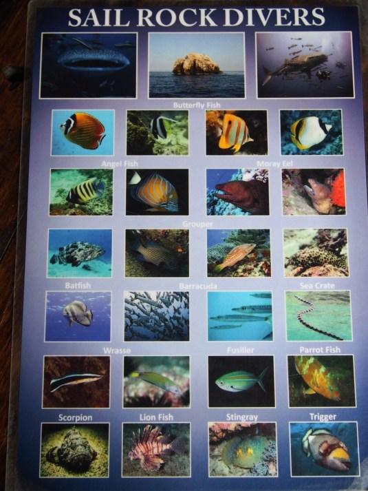 Les poissons que j'ai vus (1)