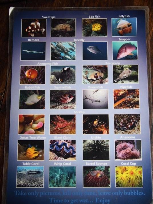 Les poissons que j'ai vus (2)