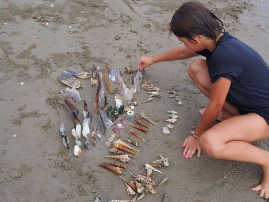 Récolte de coquillages sur la plage
