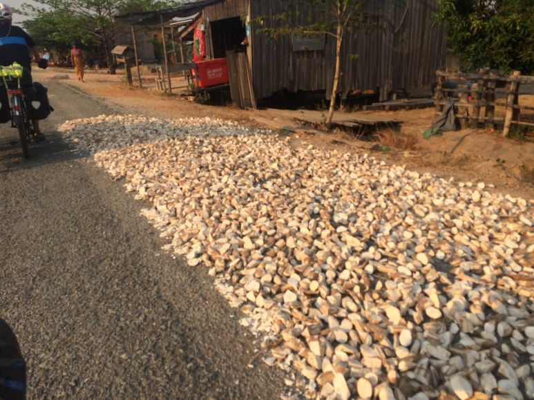 Séchage du manioc au bord de la route