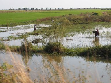 Travail près des rizières
