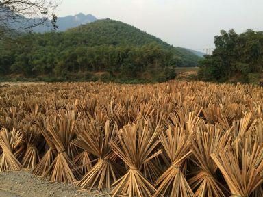 La culture du bambou est partout présente