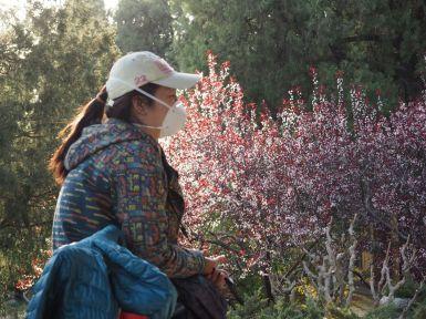 Un nez de cochon, pour (tenter d') éviter la pollution de Beijing