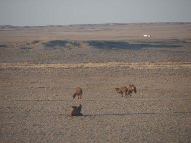 Réveil avec les chameaux
