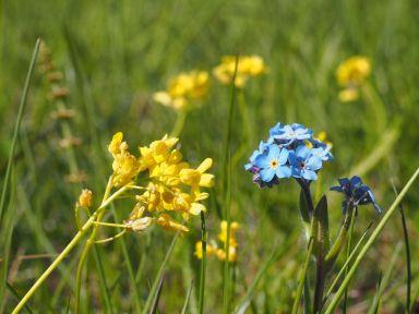 Toujours de jolies fleurs