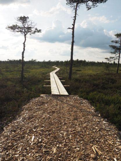 Un petit chemin pour visiter des tourbières.