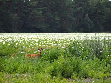 La nature s'offre à nous par surprise!