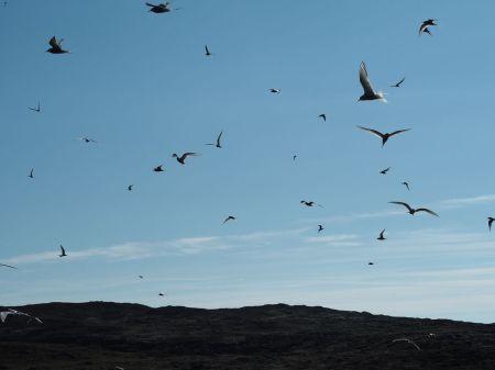 Ici, c'est le paradis des oiseaux