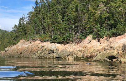 Nous avons même pu voir des phoques (mais ils restent rarement à poser pour les photos)