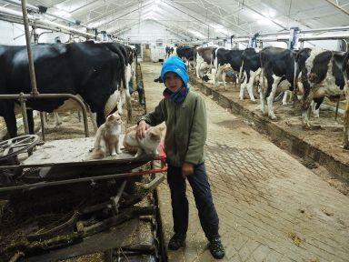 Visite de la ferme laitière