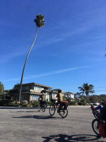 Les palmiers sont immenses