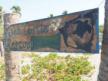 visite d'un programme de sauvegarde des tortues