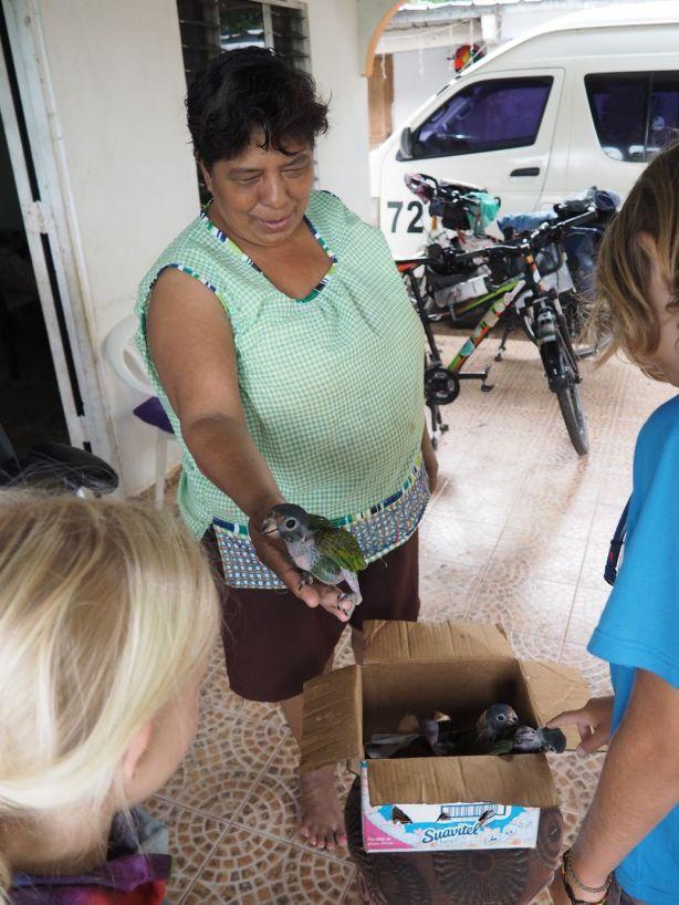 Bolivia nous accueille chez elle. Il y a des bébés perroquets.