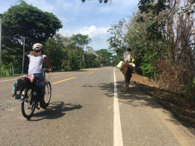 Les chevaux sont omniprésents dans la campagne