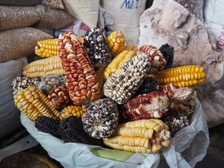 Une grande variété de maïs