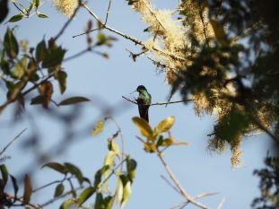avec plein de petits colibris
