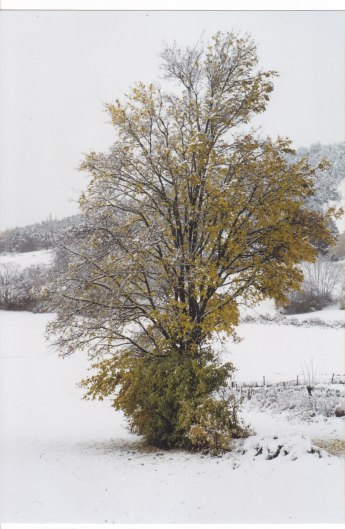 Arbre et la neige 11.11.2003