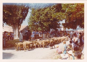 Autel et défilé de moutons 15.08.1972