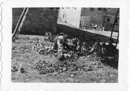 Cueillette du tilleul au Charel 1954