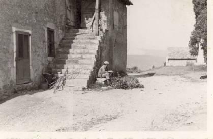 Cueillette tilleul Ancienne maison Elisé