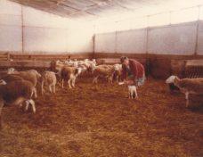 06.1983 la bergerie et la bergère