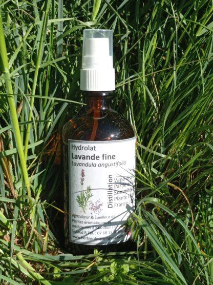 Hydrolat lavande fine l'herbier des garrigues