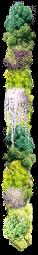 vegetal_12
