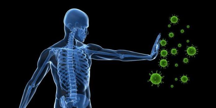 Comment fonctionne le système immunitaire