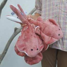 raies-doudous-corail