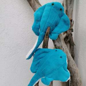 les petites raie turquoise