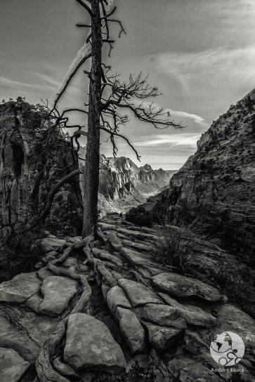 Zion National Park : Angels landing