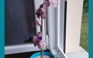 épingle pinterest crochet orchidée pour la maitresse