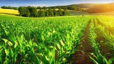 Photo de Agriculture : Insertion des technologies aériennes pour le développement du secteur