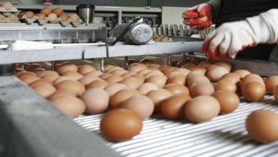 Photo de Le Maroc a produit plus de 6,6 milliards d'œufs en 2018