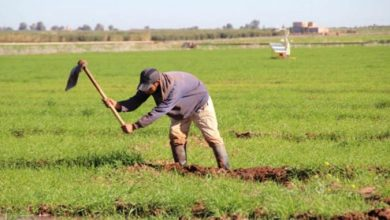 Photo de Agriculture. Trois régions marocaines certifiées ISO-9001