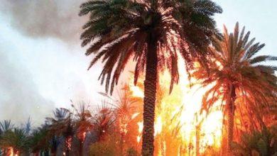 Photo de Vague de chaleur. Plus de 2.540 palmiers ravagés par le feu à Errachidia