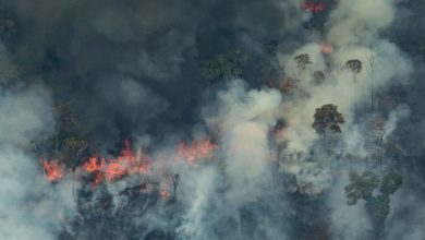 Photo de Amazonie: le pape déplore les feux provoqués «par des intérêts qui détruisent»