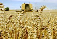 Photo de Campagne céréalière 2020-2021: une «très bonne» récolte de 103,2 Mqx
