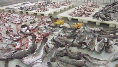 Photo de Covid-19: Les prix du poisson s'effondrent, les volumes maintenus