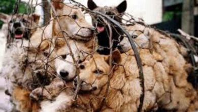 Photo de Chine: Les chats et les chiens ne figurent plus dans les menus