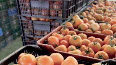 Photo de Espagne : la tomate marocaine à la rescousse du premier concurrent du Maroc