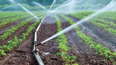 Photo de Maroc: seule la pluie pourrait remonter le moral des agriculteurs