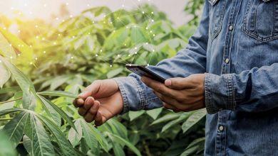 Photo de Agriculture. C'est parti pour Filaha Innovation Program