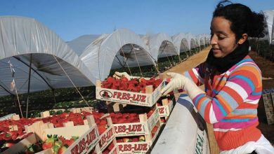 Photo de Saisonnières marocaines en Espagne : une amélioration des conditions s'impose
