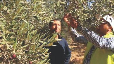Photo de Agriculture. Le programme Al Moutmir tient ses promesses