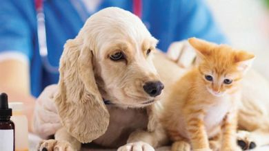 Photo de IPV Santé animale : Best Financière entre dans le capital