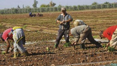 Photo de Agriculture : un nouveau dispositif de soutien aux petits agriculteurs