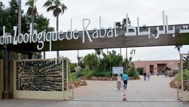 Photo de Rabat : le Jardin zoologique accueille deux tigres